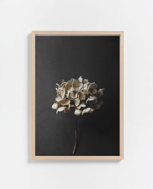 Paper Collective | Still Life 04 Print 50 x 70cm