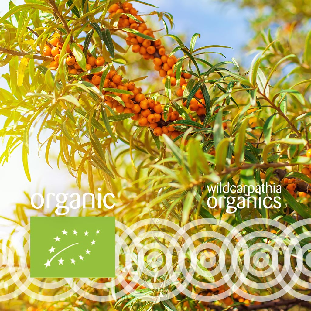 Sea Buckthorn Fruit Carrier Oil - Wild Carpathia Organics