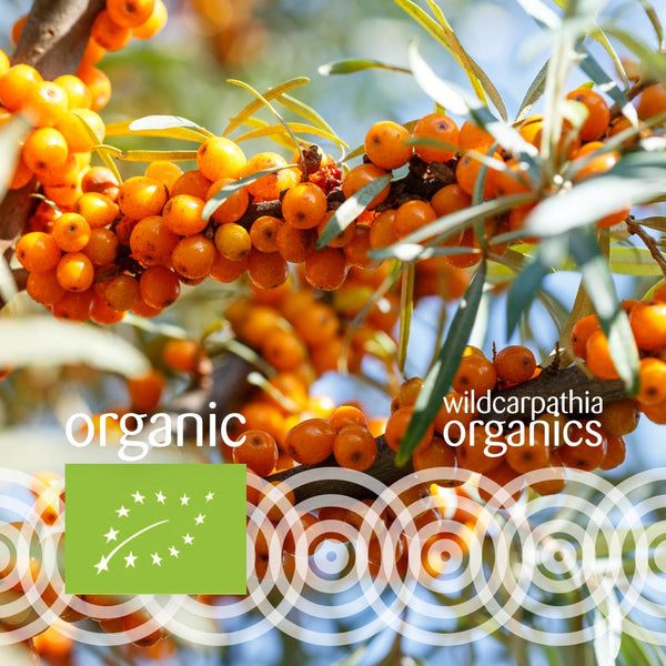Sea Buckthorn Seed Carrier Oil - Wild Carpathia Organics