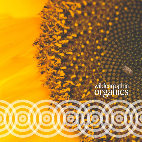 Sunflower Carrier Oil - Wild Carpathia Organics
