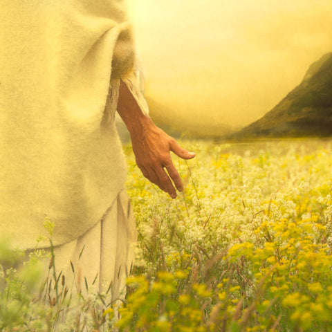 Jesus walking through a field of lilies.