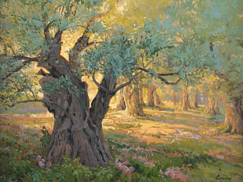 Olive trees in the garden of Gethsemane with light shinning through.