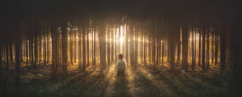 Young Joseph Smith kneeling in a grove of trees with light shining through.