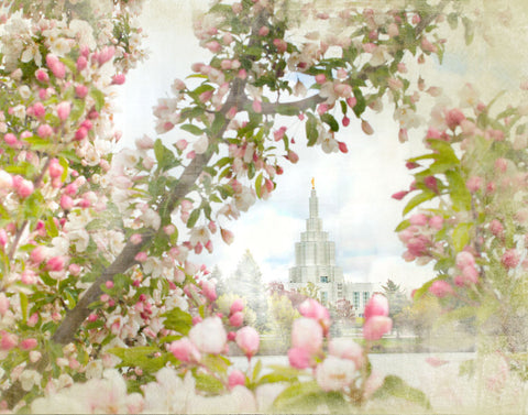 Idaho Falls Idaho Temple with pink Blossoms.