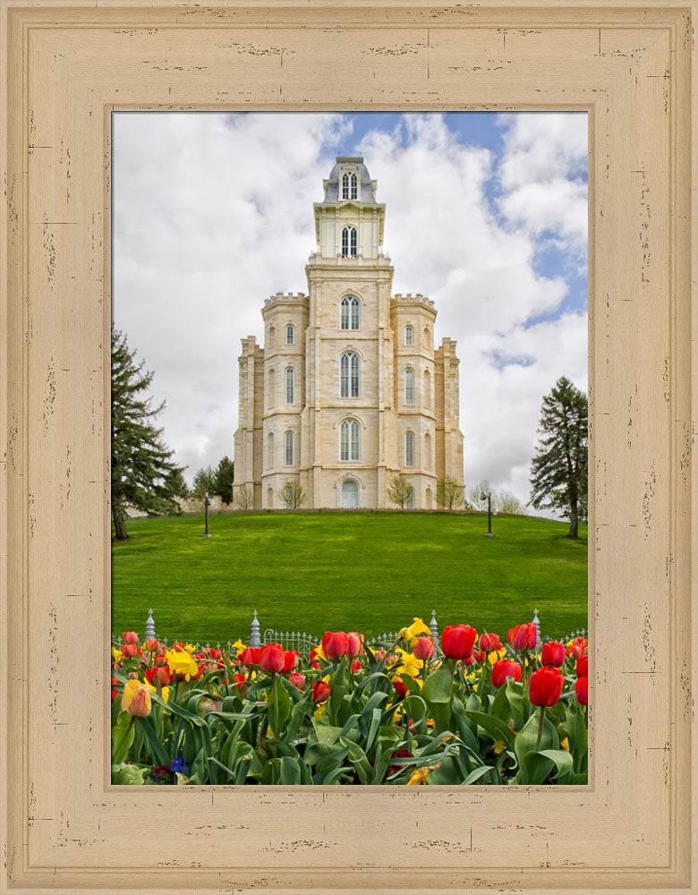 Manti Temple - Tulips and Grass by Robert A Boyd
