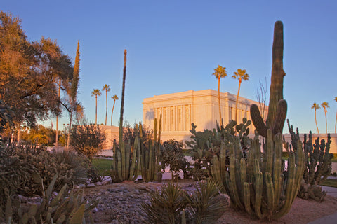 Mesa Temple - Cactus by Robert A Boyd