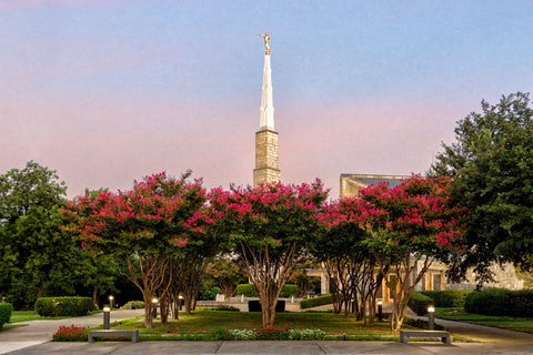 Dallas Temple - Flowering Trees by Robert A Boyd