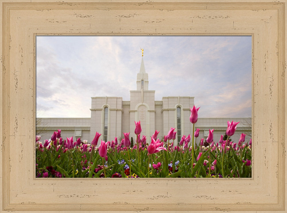 Bountiful Temple - Tulips by Robert A Boyd