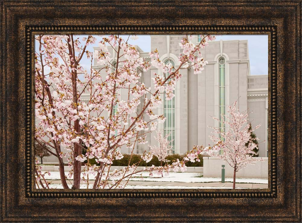 Mt Timpanogos Temple - Cherry Blossoms by Robert A Boyd