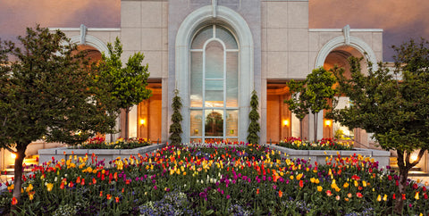 Mt Timpanogos Temple - Blooming Spring by Robert A Boyd