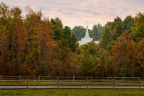 Palmyra Temple - Through the Trees by Robert A Boyd