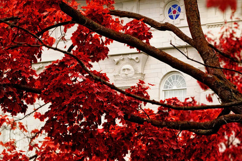 Nauvoo Temple - Red Leaves by Robert A Boyd
