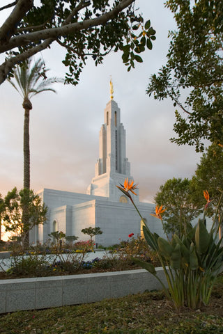 Redlands Temple - Flower by Robert A Boyd