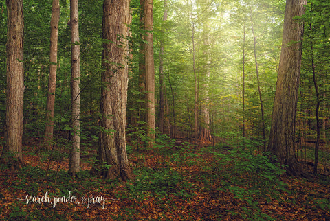 The Sacred Grove - Search Ponder and Pray 12x18 repositionable poster