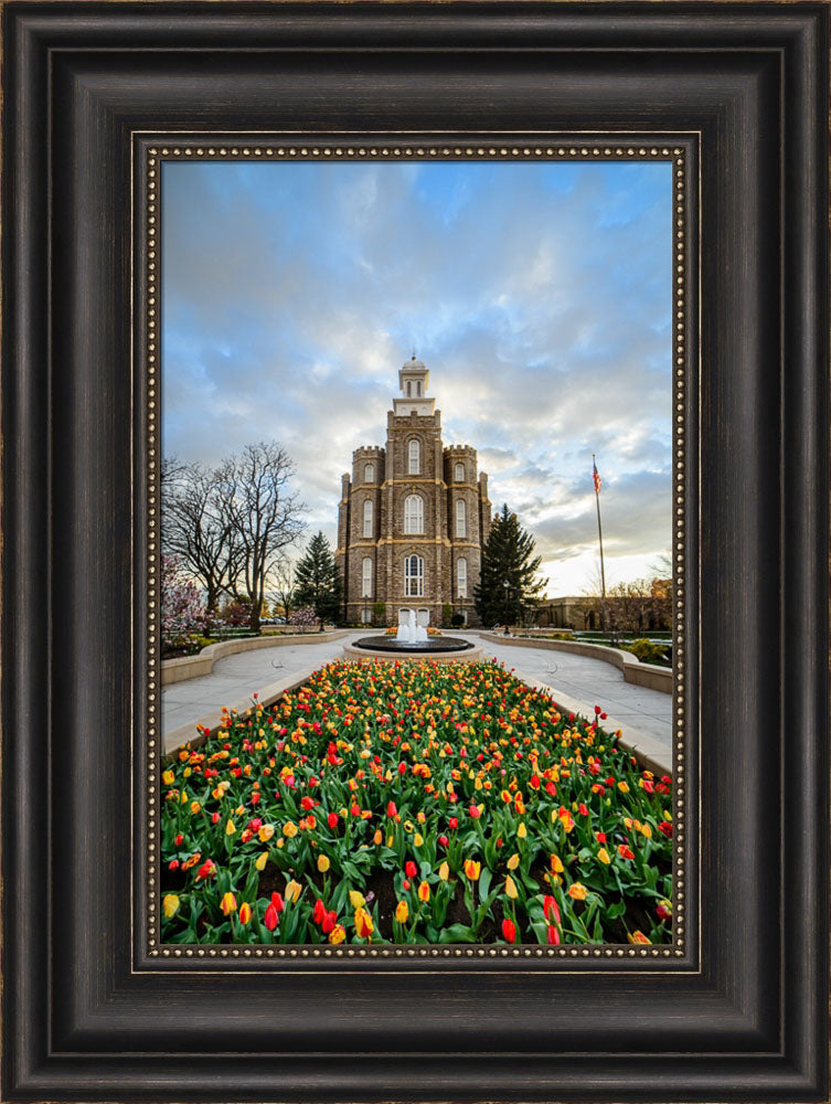 Logan Temple - Tulips by Scott Jarvie