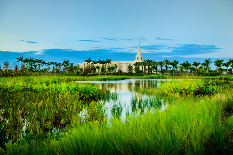 Fort Lauderdale Temple - Green Swamp by Scott Jarvie