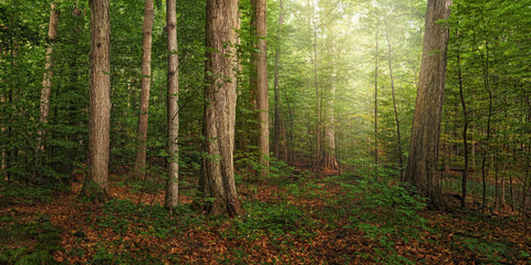 Sacred Grove - panoramic by Robert A Boyd