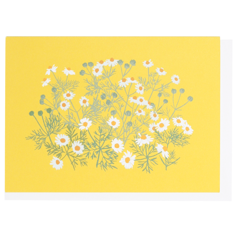 Chamomile Boxed Note Cards