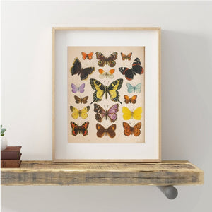 Butterflies Retro Poster Wall Art Prints on Canvas