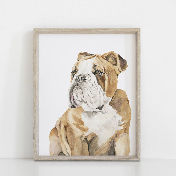 English Bulldog Giclée Print
