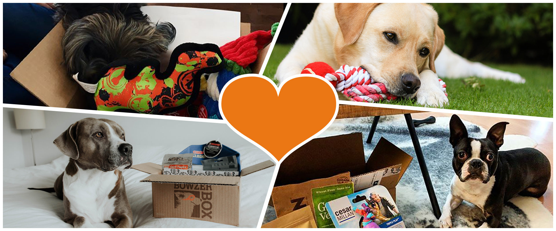 A collage of dogs playing with their Bowzer Box of goodies