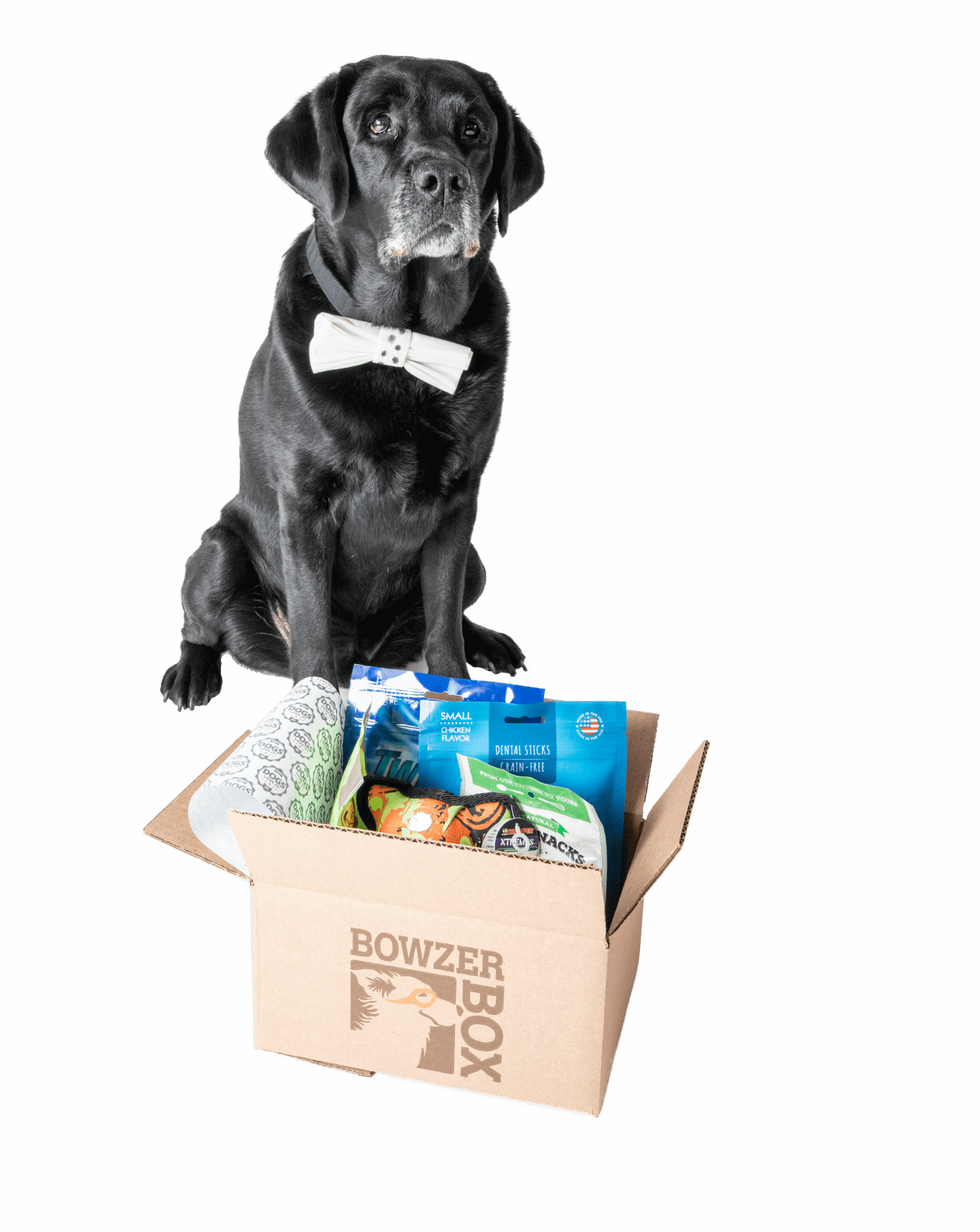 Happy dog with Bowzer Box
