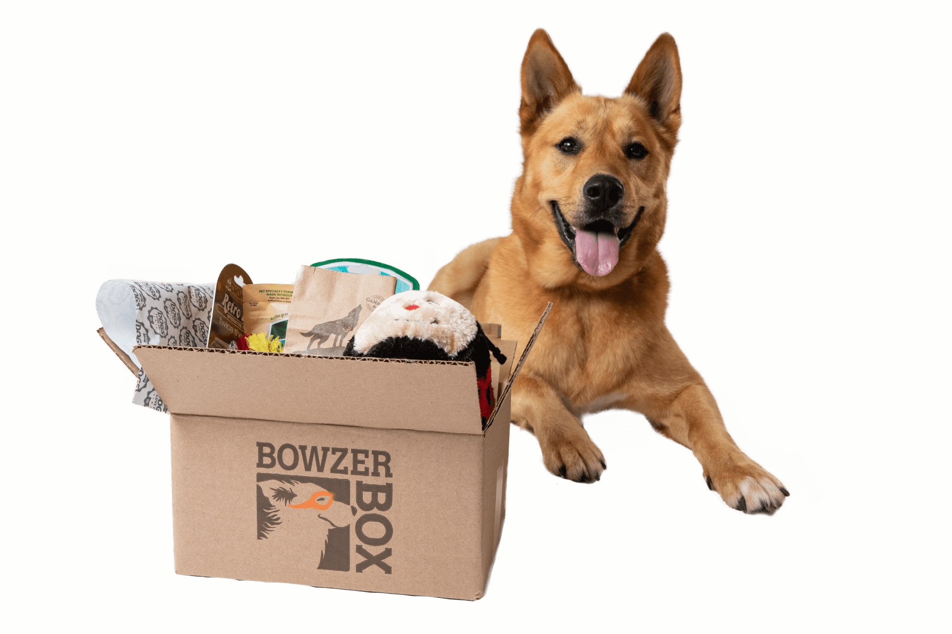 Dog happy with delivery of their Bowzer Box
