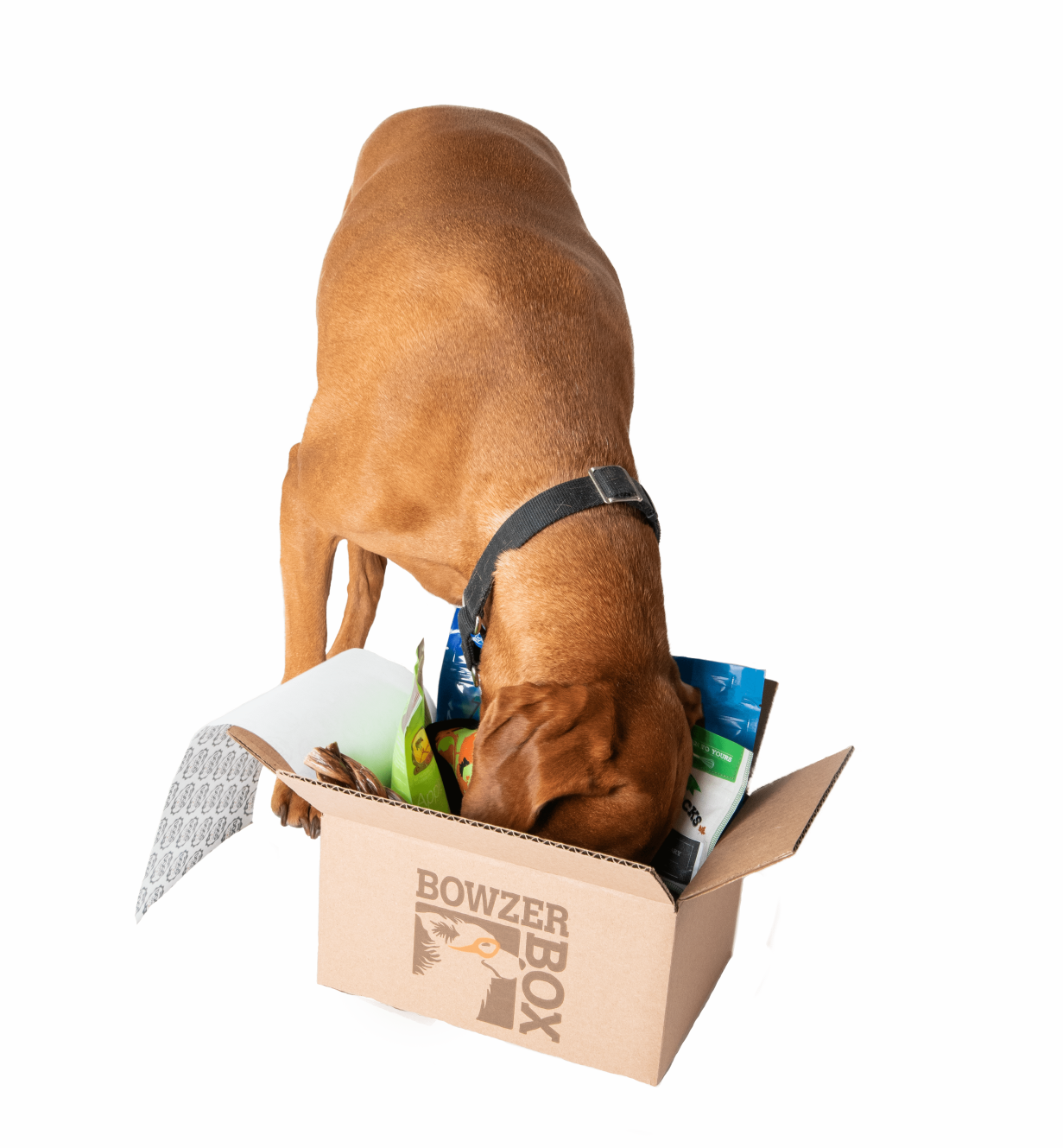 Dog looking in a Bowzer Box