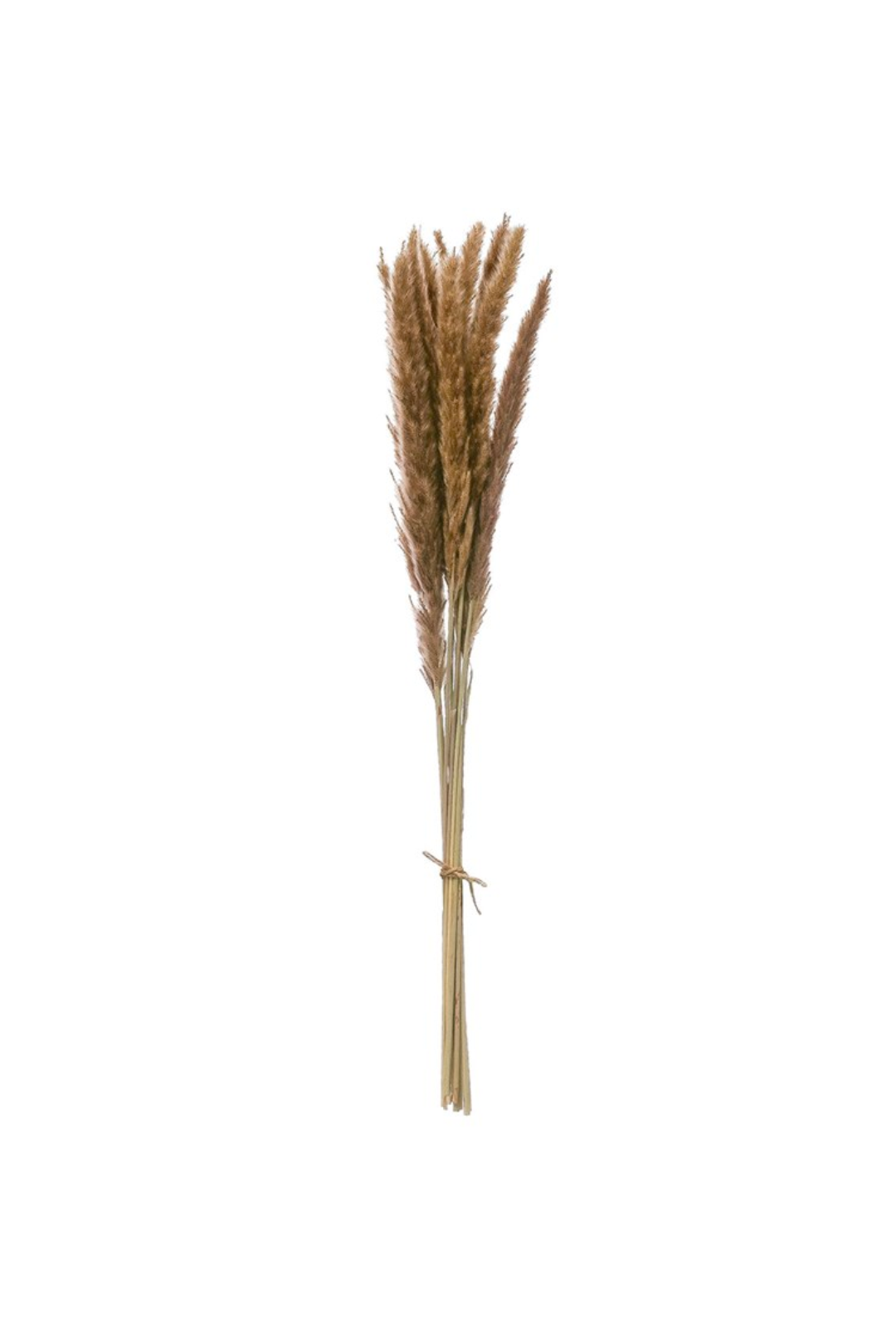 Dried Natural Fountain Grass Bunch