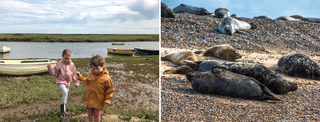 Seal Trip from Morston Quay