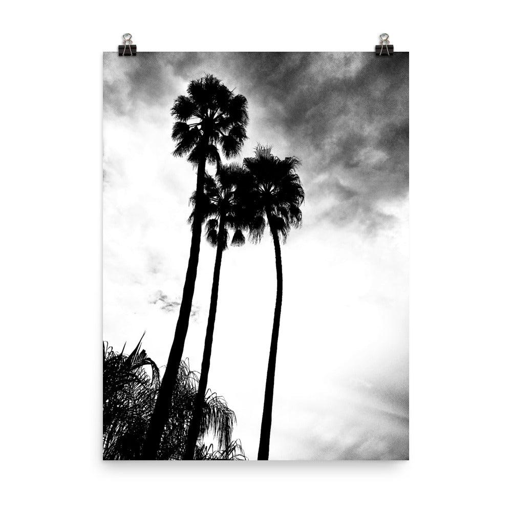 Palm Trees B&W Photograph Poster