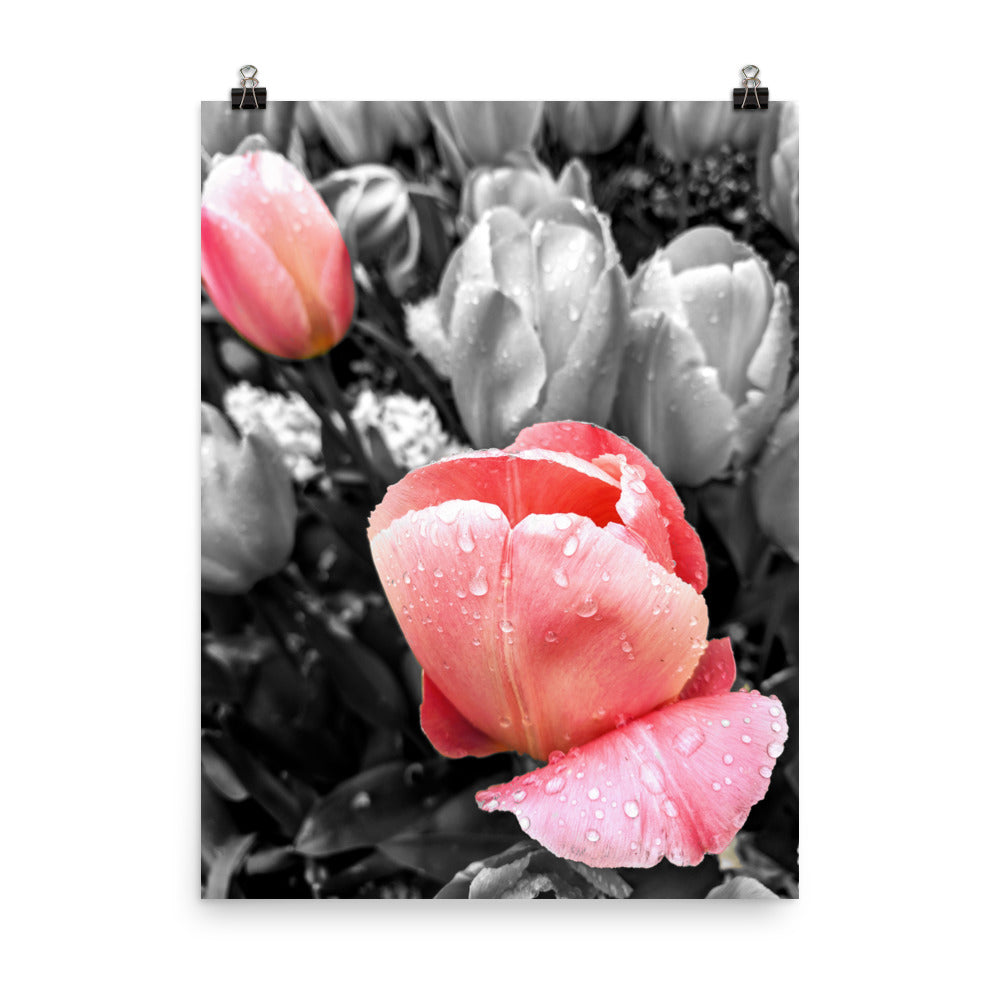 TULIPS Photograph Poster