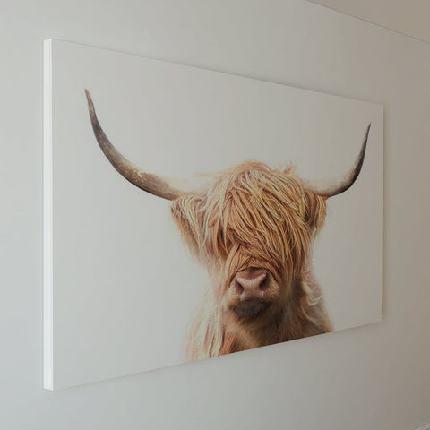 Portrait of a Highland Cow - Canvas Mérida Fine Print Art