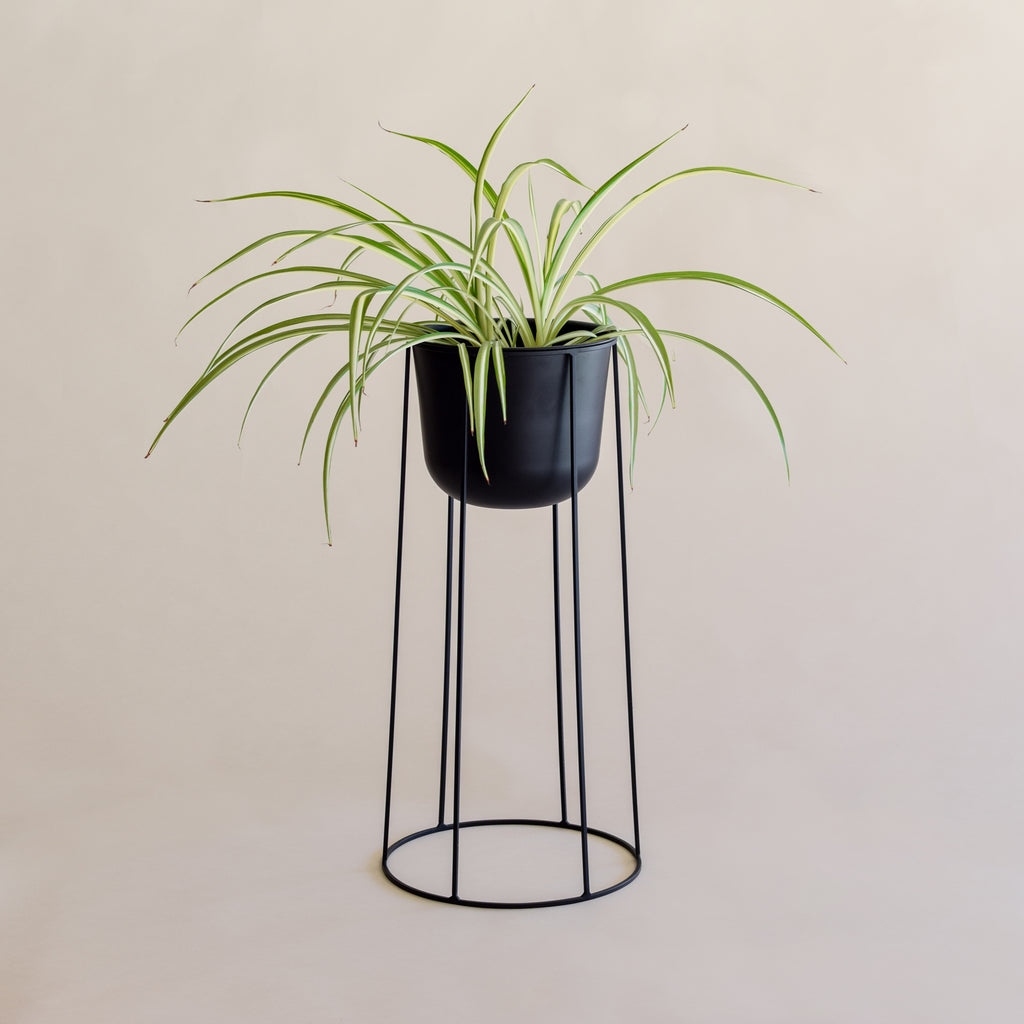 Wire Base + Wire Pot