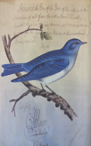 Bluebird Canvas Art by Elizabeth Lucas