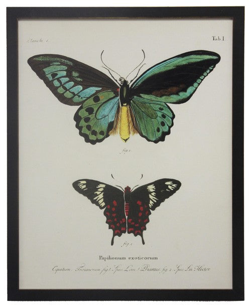 Butterfly Specimen Wall Art