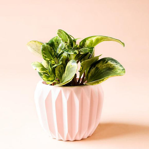 Pale Pink Matte Fluted Pot