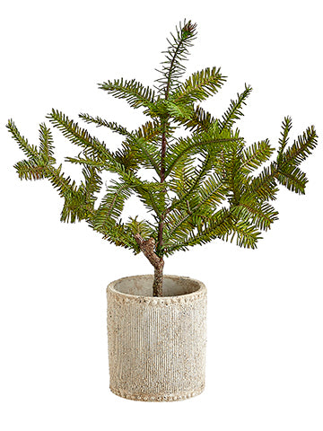 Pine Tree in Cement Pot