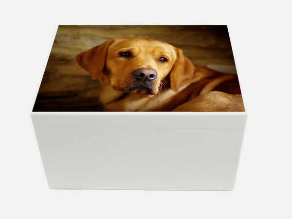 Extra Large A4 white wooden chest with your own pet photo(s)|33.5 x 26 x 18 cm