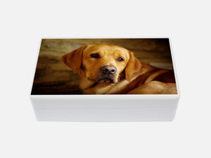 Jewellery box with your own pet photo(s)19.8 x 11.6 x 6.3 cm