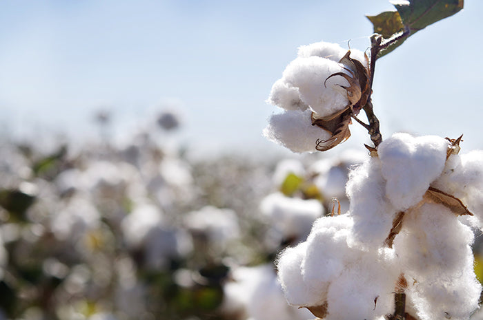 Cottoning On To Cotton