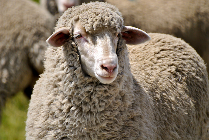 Why Wool? Here Are 4 Reasons