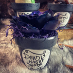 Deadly Night Shade succulent