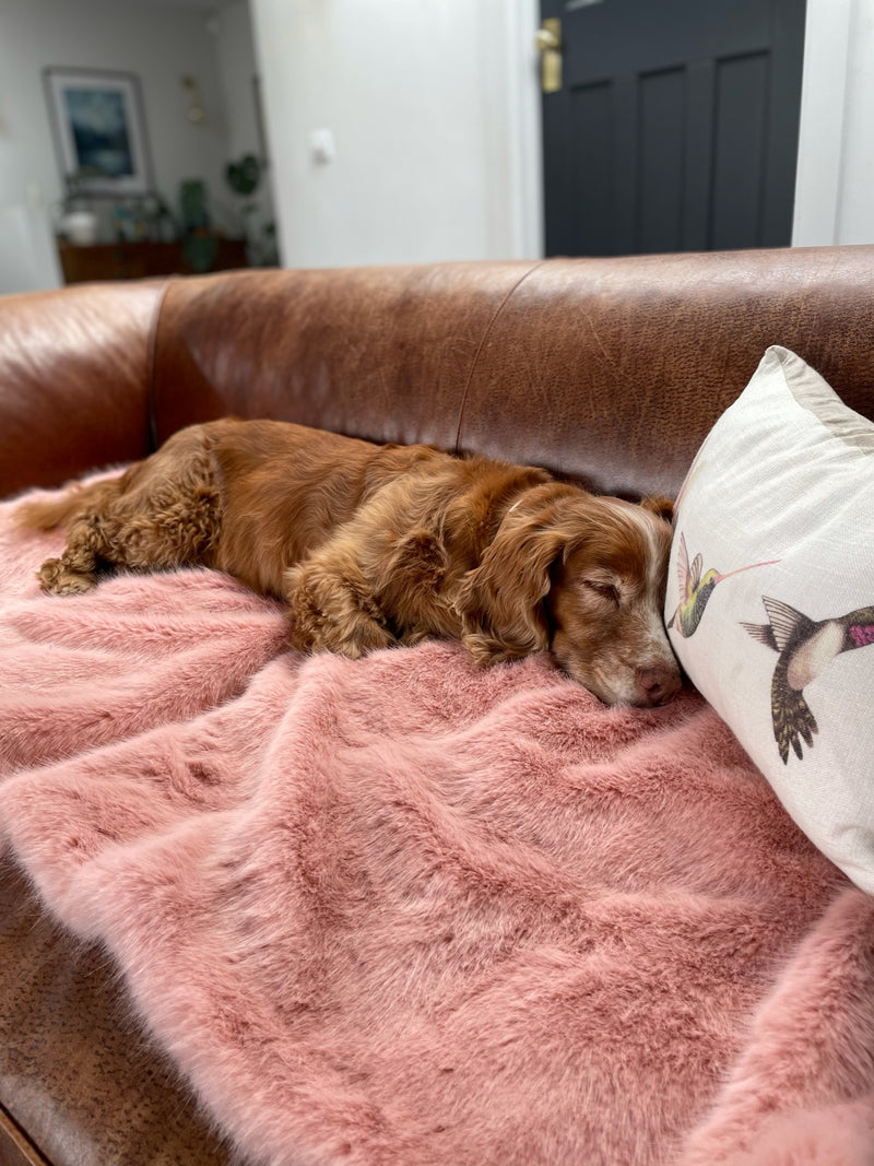 Dog lying on a pink faux fur pet blanket  sofa saver by Helen Moore