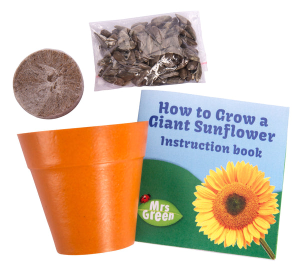 Giant Sunflower Growing Kit