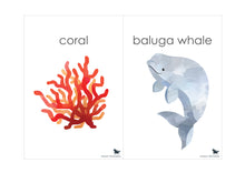 Load image into Gallery viewer, OCEAN ANIMAL FLASH CARDS