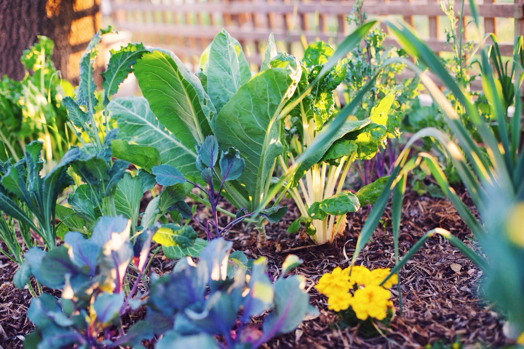 Video - Gardening: Food for the Soul