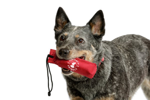 Canvas tug toy for your dog.