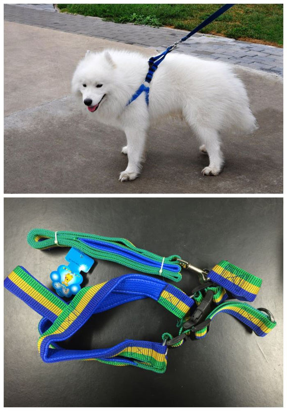 Dog_Harness_GreenBlueYellow_RDVLBCZ0HFRH.jpg