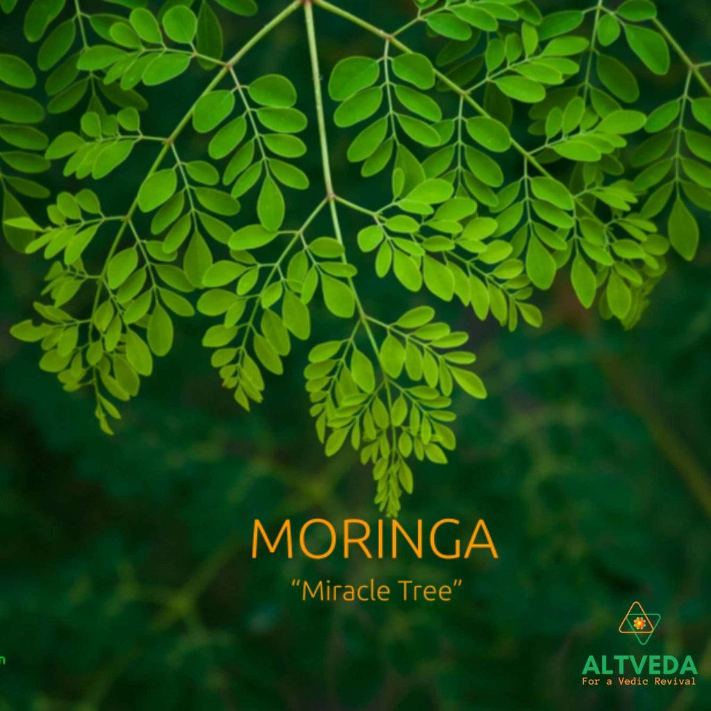The Nutritional And Medicinal Health Benefits of Moringa, a blog image